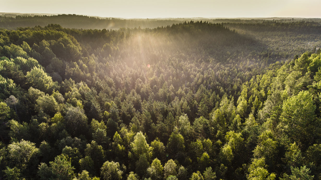 Forest bathing in sunlight from above
