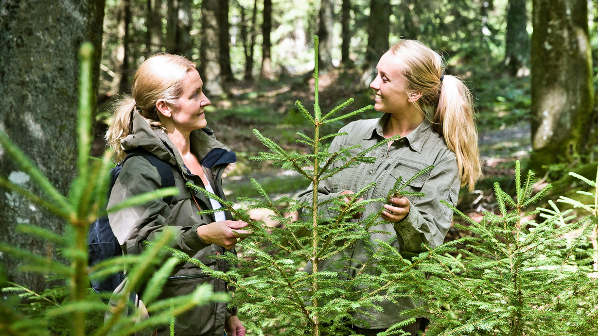 Two women standing behind firs in the forest
